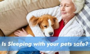 Is Sleeping with Your Pets Safe
